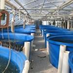 Shrimp Greenhouse