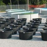 These 250-gallon poly tanks are being used in a pH study.