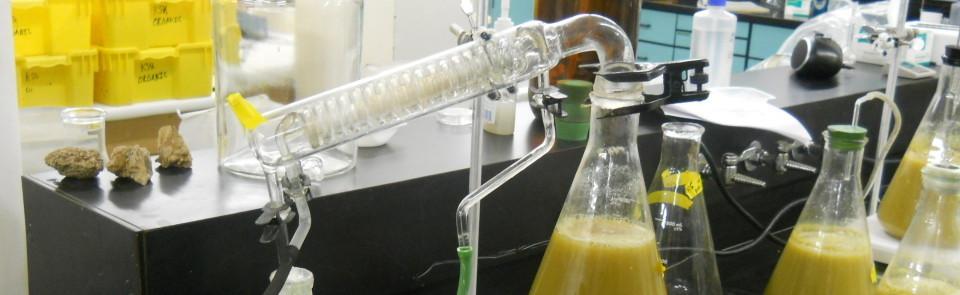 Lab still
