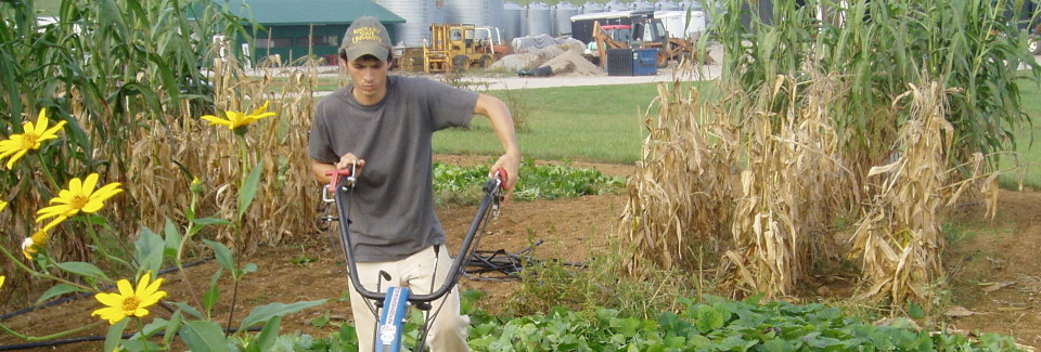 Measuring yield of potential alternative biofuel crops at the KSU Research and Demonstration Farm.