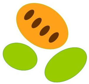 Graphics of cartoon pawpaw fruit