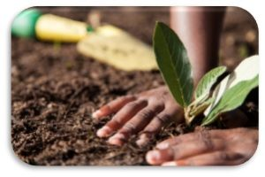 Hand Planting Flower
