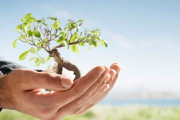 Hands holding a tree representing Environmental Science