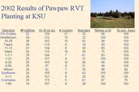 2002 Results of Pawpaw RVT Planting at KSU - Picture of Slide 20