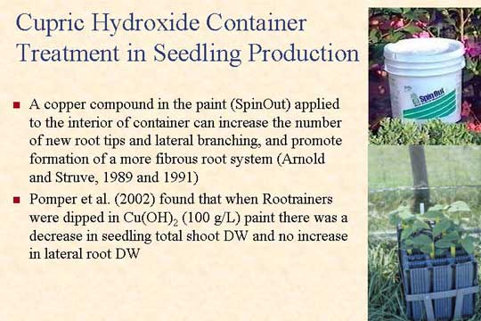 Cupric Hydroxide Container Treatment in Seedling Production - Picture of Slide 13