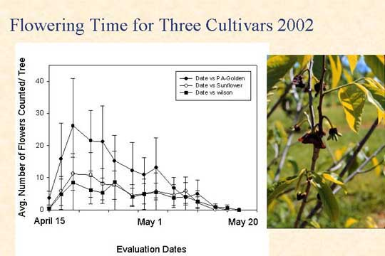 Flowering time for three cultivars 2002
