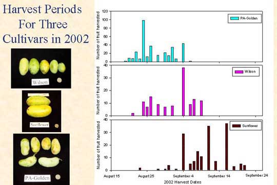 Harvest periods for three cultivards 2002 slide