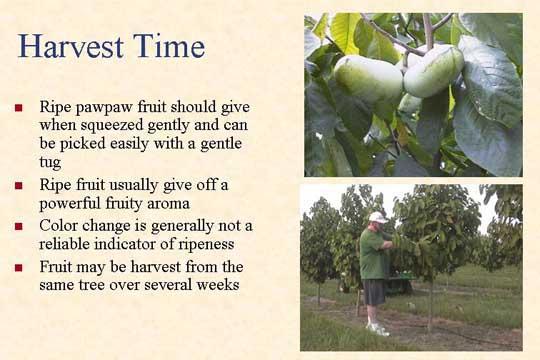 Harvest Time - Picture of Slide 29
