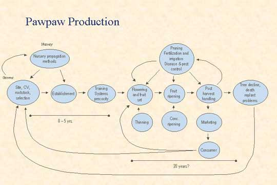 Pawpaw Production - Picture of Slide 8