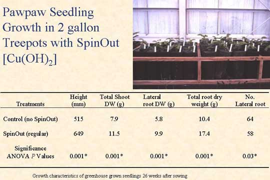 Pawpaw Seedling Growth in 2 gallon Treepots with SpinOut - Picture of Slide 14