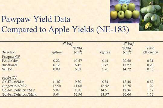 Pawpaw Yield Data Compared to Apple Yields (NE-183) - Picture of Slide 21