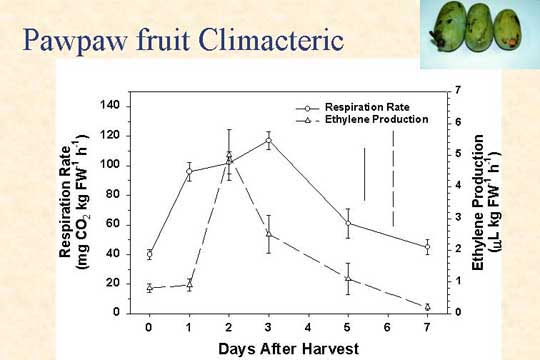 Picture of Pawpaw fruit climacteric - Slide 31