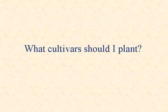 What cultivars should I plant - Picture of Slide 16