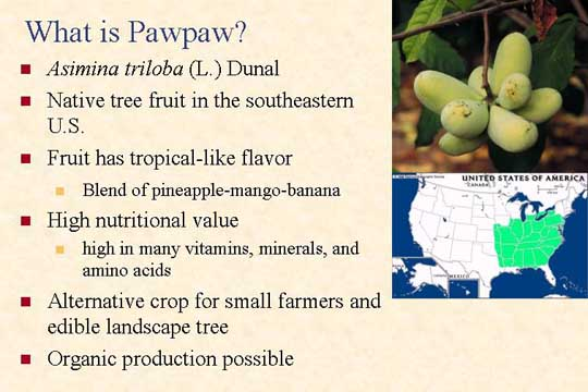 What is PawPaw - Picture of Slide 2