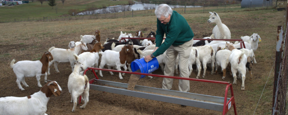 Picture of Dr. Andries feeding a herd of goats in a field