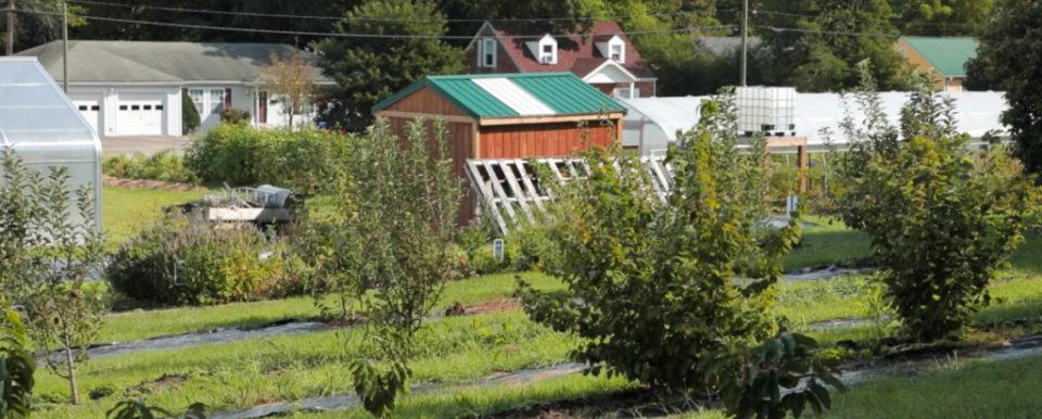 BEREA, Ky., -- Berea Urban Garden shoot for Kentucky Grown, Wednesday, Sept. 06, 2017 at Berea Urban Garden in BEREA.