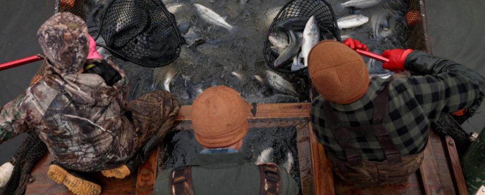 Picture of Mayer Fish Farm