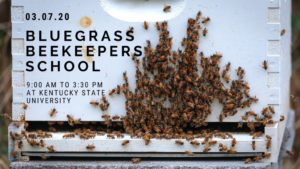 Picture of bees on a wall for Bluegrass Beekeepers School
