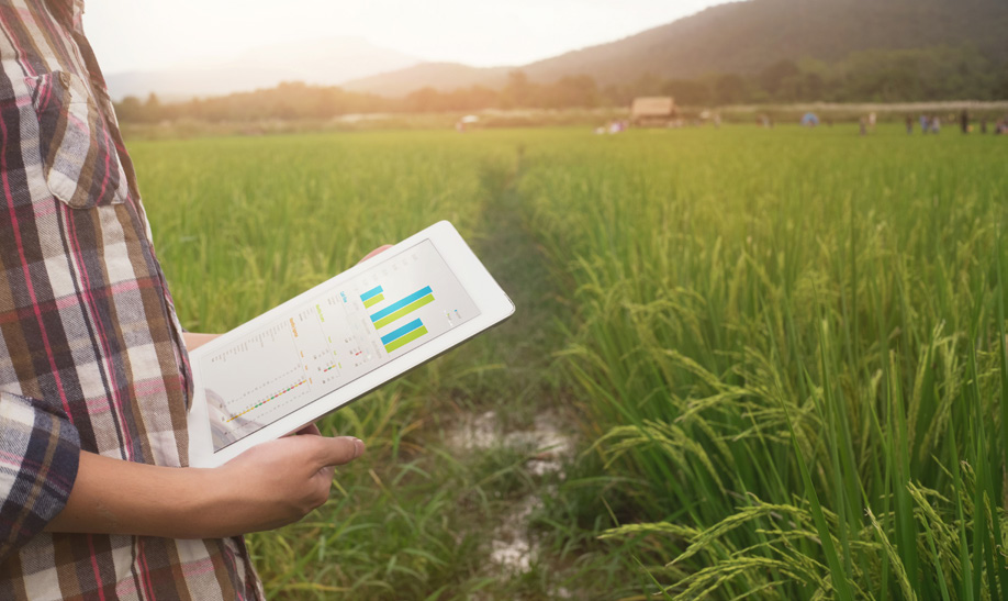 Person holding tablet in field