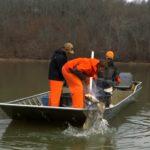 Video of Asian Carp